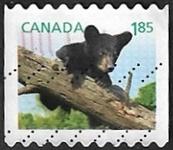 Ours noir américain (auto-adhésifs)
