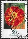 Rose d'Inde (Tagetes erecta)