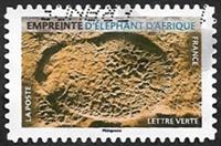 Empreinte d'éléphant d'Afrique