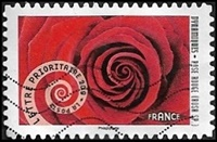 Rose rouge (Rosa SP.)
