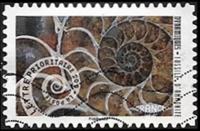 Fossile d'amonite
