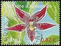 Orchidée Aphrodite Paphinia cristata