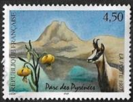 Parc des Pyrénées L´isard et le lis jaune
