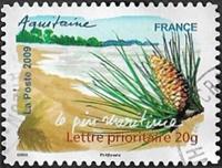 Aquitaine - Le pin maritime