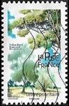 Frêne élevé - Fraxinus excelsior