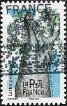 Baobab africain - Adansonia digitata