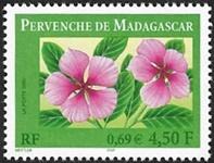 Pervenche de Madagascar