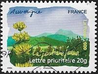 Auvergne - La gentiane jaune