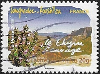 Languedoc-Roussillon - Le thym