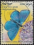 Polyommatus icarus zelleri