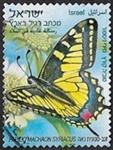 Papilio machaon syriacus