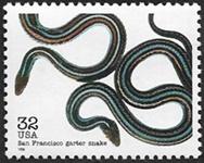 Serpent jarretière de San Francisco